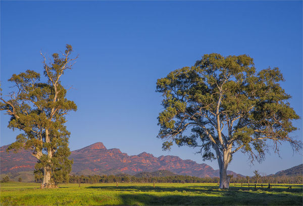 First light of Morning near Wilpena pound, Flinders Ranges, South Australia