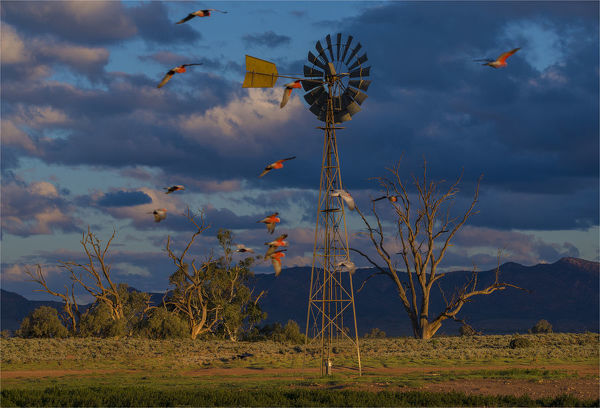 Late afternoon light at a remote agricultural windmill in outback South Australia