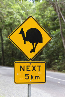 travel/road signs/cassowary warning sign rainforest daintree national