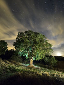 milky way/celtis australis tree 100 years field illuminated
