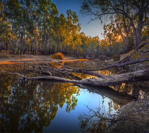 travel/southern lightscapes australia/late afternoon light just dusk banks billabong