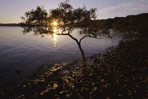 travel/queensland qld whitsundays/mangrove trees gravel beach backlit sunset cape
